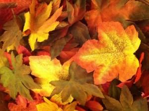 leaves-300x224