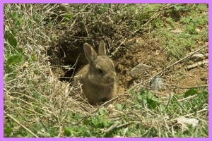 Bunny_in_a_hole_by_cuzvans8er